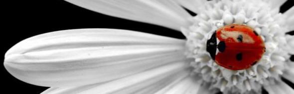 C'è una parte sempre in fiore in noi che si rigenera anche mentre provi a raccontarla.