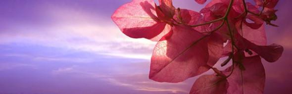 Chi non ha la pazienza e la volontà di innaffiare i suoi fiori dirà di amarli