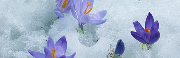 Chi ha la neve nel cuore non vuole che germogli qualcosa fuori da sé.