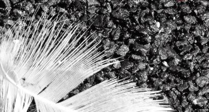 foto/grammi dell'anima (1 edizione 2010 non disponibile)